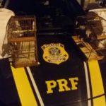 Maus-tratos: Aves foram encontradas em gaiolas sujas e cheias de fezes, de acordo com os agentes federais (Foto: Cedida pela PRF)