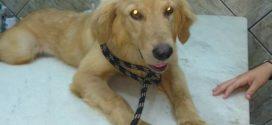 Volta Redonda: Cachorro agredido com golpes de machadinha recebe alta