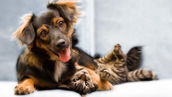 Amigo para todas as horas: Todos os animais devem ser bem cuidados e ter seu bem-estar assistido (Foto: Divulgação)