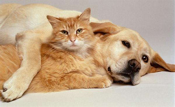 Juntos: Consultar um veterinário ou especialista em comportamento animal pode ser uma boa ideia se a situação não for das mais favoráveis (Foto: Divulgação)