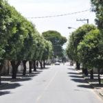 Cuidado com o ambiente: Corte e podas de árvores têm que obedecer uma série de critérios em Itatiaia (Foto: Divulgação)