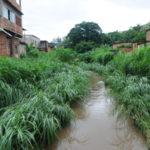 Moradores pedem que prefeitura faça limpeza no Rio Barra Mansa (foto: Paulo Dimas)
