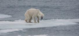 Documentário aborda sobre a ameaça climática no Ártico