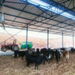Produção: Método oferece melhor qualidade de vida aos animais, além de benefícios para o meio ambiente (Foto: Divulgação)