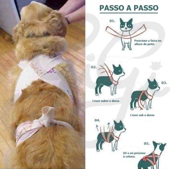 'Abraçado': Método consiste em amarrar o corpo do cachorro com uma faixa