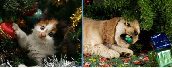Alerta com os pets: É preciso atenção na hora de enfeitar a casa para o Natal (Foto: Divulgação)