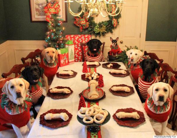 Ceia própria: Cães e gatos possuem necessidades nutricionais específicas (Fotos: Divulgação)