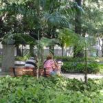 Atenção: Funcionários redobraram as atenções sobre os macacos que vivem no parque - Arquivo