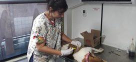 Prefeitura de Barra do Piraí inicia programa de castração de animais de rua