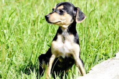Adoção: Cães e Gatos estarão a espera de um dono em feira de adoção - Carina Rocha - PMR