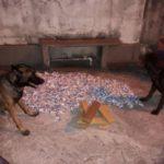 Vigiando: Cães tomam conta de material apreendido pela PM