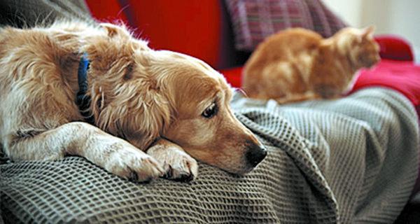Pós-férias: Alguns cuidados devem ser tomados com o seu animal. Foto: (Divulgação)