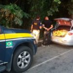 Motorista foge de bloqueio da PRF, abandona carro e  acaba preso