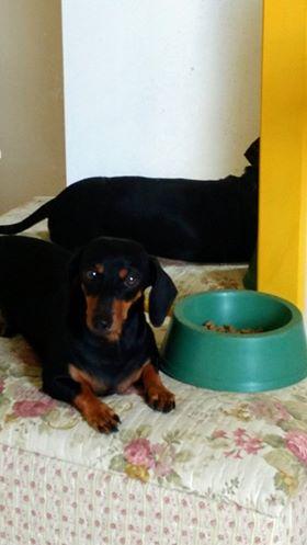 Desaparecida: Cadela é dócil e atende pelo nome de Mila