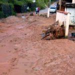No bairro São Judas Tadeu teve quedas de árvores devido ao vento e a força da chuva (foto: Divulgação)