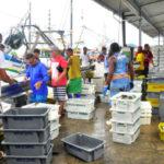 O objetivo do defeso da sardinha é garantir a sustentabilidade da pesca a longo prazo, com a manutenção e preservação da espécie (Foto: Divulgação)