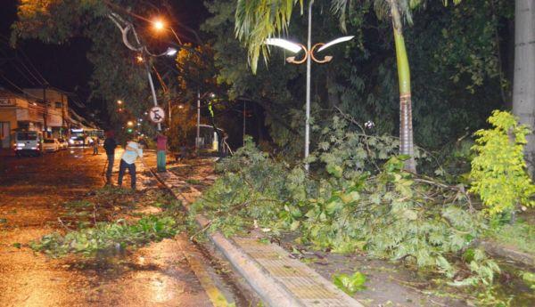 Árvores caíram em diversos bairros de Volta Redonda (foto: Evandro Freitas - Secom)