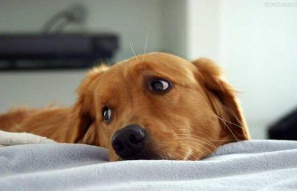 Carinho: Dê atenção especial para amortecer o estresse que muitas vezes acontece nos animais com as mudanças no ambiente familiar (Foto: Divulgação)