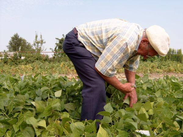 Previne: Colheita e produção dos remédios devem ser acompanhadas por especialistas (Foto: Divulgação)