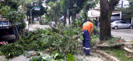Chuva provoca queda de arvores em Resende