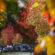 Outono começa nesta terça e deve amenizar temperaturas
