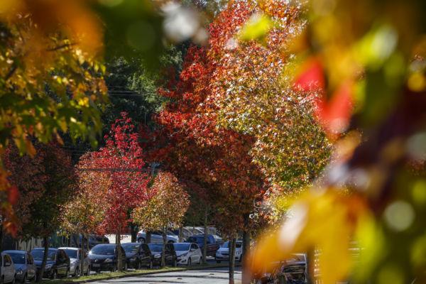 Outono: Nova estação começa nesta terça (20)