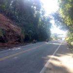 Perigo: Árvore tem risco de cair sobre trecho da Rio-Santos