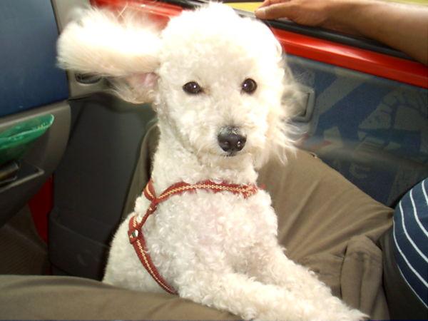 Nós: Fique atento e verifique se o seu animalzinho está precisando desembolar os pelos (Foto: Divulgação)