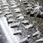 Droga: PM apreende cocaína e maconha em Volta Redonda