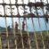 Justiça dá mais prazo para Samarco fechar acordo sobre Mariana