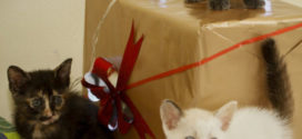 Gatos transmitem ou não doenças para os seres humanos?