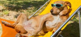 Os benefícios dos banhos de sol