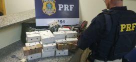 PRF prende dois homens com pássaros silvestres