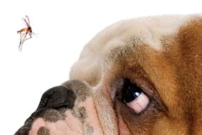 Vigilância Ambiental alerta sobre prevenção à leishmaniose visceral