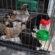 Santa Rosa vai ganhar clínica para animais