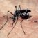 Estado do Rio está no mapa da dengue do Ministério da Saúde