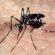 Levantamento detecta índice de infestação do mosquito Aedes aegypti em Volta Redonda