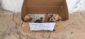 Jovem faz campanha para doar filhotes de cachorro abandonados