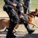 Batalhão de Ações com Cães faz balanço de apreensões no Estado do Rio