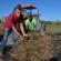 Porto Real auxilia produtores rurais na colheita de feijão