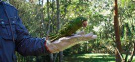 Comércio ilegal de avessilvestres é combatido
