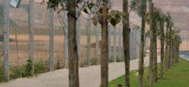 Projeto de arborização prevê o plantio de 15 mil mudas em Volta Redonda