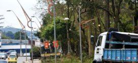 Volta Redonda realiza poda e plantio de árvores em revitalização da Beira Rio