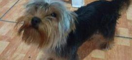 Internauta pede ajuda para encontrar cão desaparecido