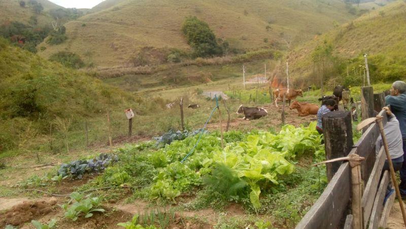 Quatis ganhou mais de sete mil animais no rebanho bovino nos últimos anos - Diario do Vale