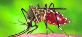 Pacientes ainda sofrem com efeitos colaterais da chikungunya
