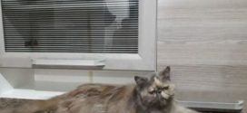 Internauta busca por gata desaparecida em Volta Redonda