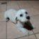 Internauta busca por cão desaparecido há três dias em Pinheiral