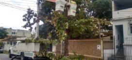 Secretaria Municipal de Meio Ambiente poda mais de 1700 árvores em menos de um ano em Volta Redonda