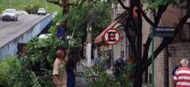 Meio Ambiente de Barra Mansa esclarece como proceder as solicitações de corte e poda de árvores
